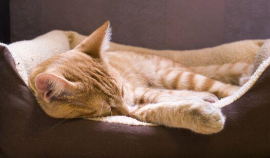 Kat i sin katteseng